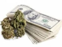 NEW YORK MARIJUANA HANDLERS CERTIFICATION COURSE 101-NY